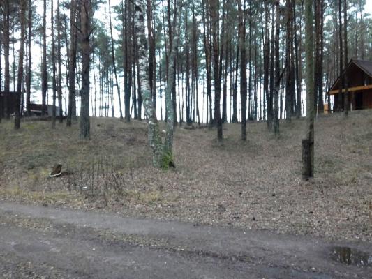 Pārdod zemi, Vārnukroga ceļš - Attēls 1